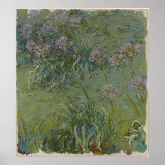Claude Monet - Agapanthus Poster