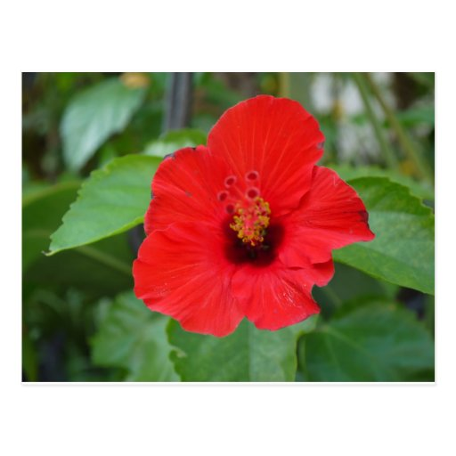 Clean flower postcards