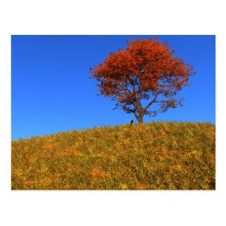 Clear Autumn Day Postcard