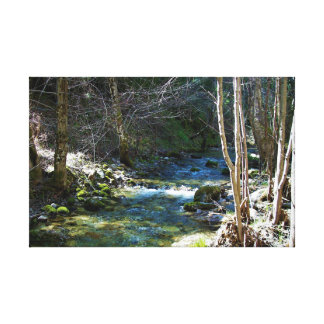 CLEAR CREEK RUNNING THROUGH THE WOODS CANVAS PRINT