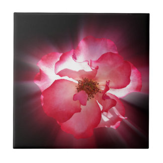 clear red petals small square tile