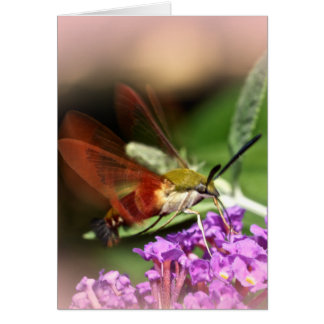 Clearwing Hawk Moth - Hemaris thysbe Card