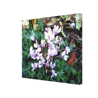 Clematis A Canvas Print