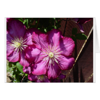 Clematis Blossoms Card