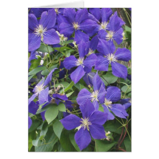 CLEMATIS, BLUE CARD