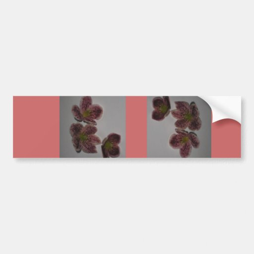 Clematis  card bumper stickers