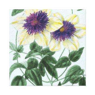 Clematis Flower Art Canvas Print