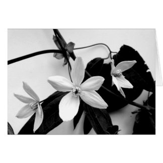 Clematis in Monochrome Notecard