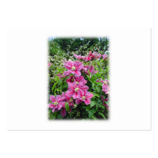 Clematis. Pretty Pink - Purple Flowers. Business Card