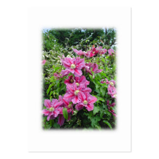 Clematis. Pretty Pink - Purple Flowers. Business Card Templates