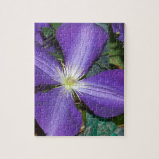 Clematis Puzzles
