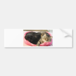 Cleo & Shiva Bumper Sticker