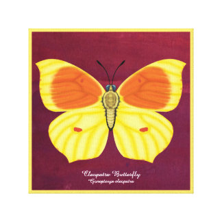 Cleopatra Butterfly Canvas Print