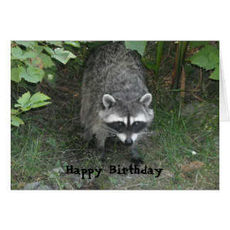 Clever Raccoon Birthday Greeting Card