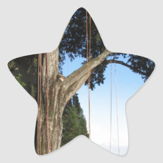 Climbing ropes hanging from a big tree star sticker