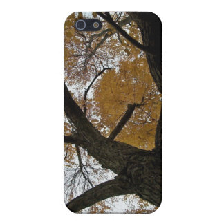 Climbing the Trees iPhone 5/5S Case