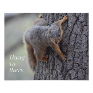 Clinging Squirrel Poster