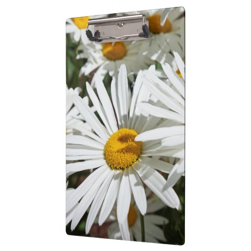 Clipboards White Daisy Flowers Daisies custom