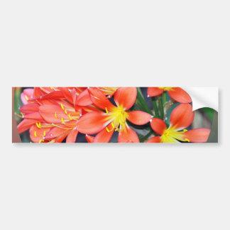 Clivia In Full Bloom Bumper Sticker
