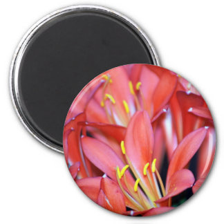 Clivia lily flower and origin refrigerator magnet