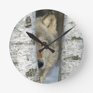 Clock with photo of gray wolf in some birch trees