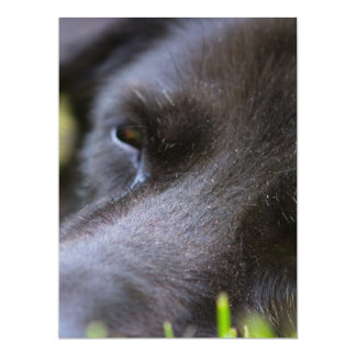 Close Up Black old dogs face with selective focus 17 Cm X 22 Cm Invitation Card