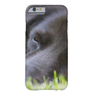 Close Up Black old dogs face with selective focus Barely There iPhone 6 Case