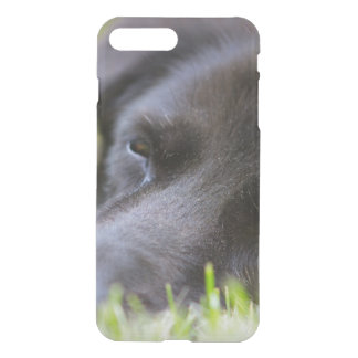 Close Up Black old dogs face with selective focus iPhone 7 Plus Case