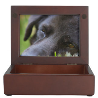 Close Up Black old dogs face with selective focus Keepsake Boxes