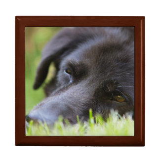 Close Up Black old dogs face with selective focus Large Square Gift Box
