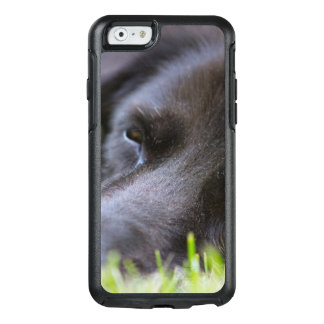 Close Up Black old dogs face with selective focus OtterBox iPhone 6/6s Case