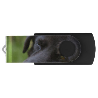Close Up Black old dogs face with selective focus Swivel USB 2.0 Flash Drive