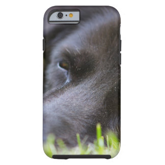 Close Up Black old dogs face with selective focus Tough iPhone 6 Case