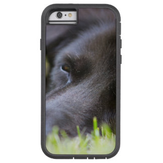 Close Up Black old dogs face with selective focus Tough Xtreme iPhone 6 Case