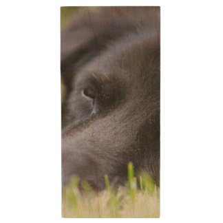 Close Up Black old dogs face with selective focus Wood USB 2.0 Flash Drive