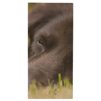 Close Up Black old dogs face with selective focus Wood USB 3.0 Flash Drive