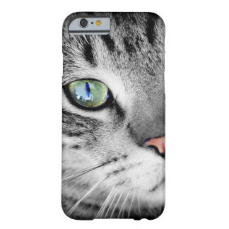 Close Up Blue-Eyed Kitten Barely There iPhone 6 Case