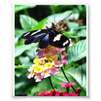 Close-Up Butterfly #4 Photographic Print
