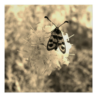 Close up Butterfly on a flower in sepia tones Poster