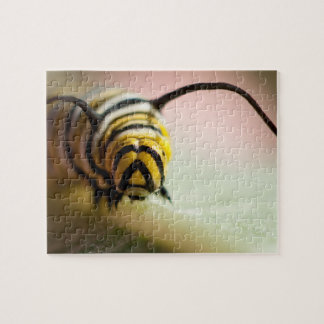 Close up caterpillar photo puzzle