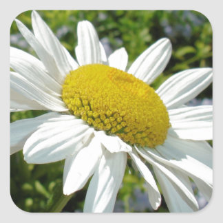 Close Up Common Daisy with Winged Insects Square Sticker