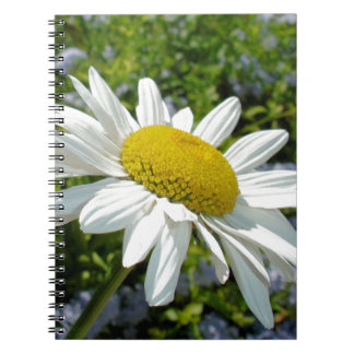 Close Up Common White Daisy With Garden Notebook