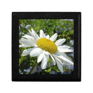 Close Up Common White Daisy With Garden Small Square Gift Box