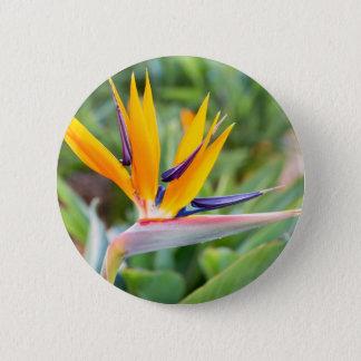 Close up Crane flower or Strelitzia reginaei 6 Cm Round Badge