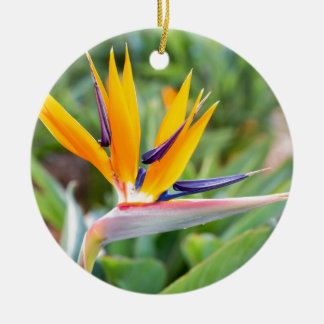 Close up Crane flower or Strelitzia reginaei Ceramic Ornament
