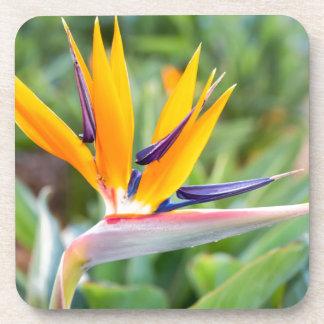 Close up Crane flower or Strelitzia reginaei Coaster