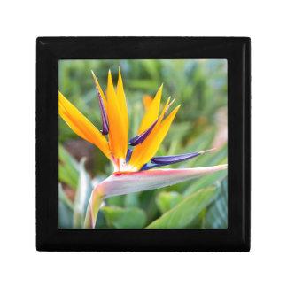Close up Crane flower or Strelitzia reginaei Gift Box