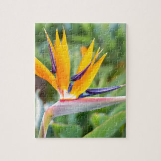 Close up Crane flower or Strelitzia reginaei Jigsaw Puzzle