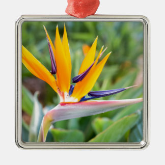 Close up Crane flower or Strelitzia reginaei Metal Ornament