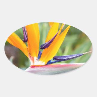 Close up Crane flower or Strelitzia reginaei Oval Sticker